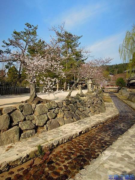 17嚴島神社疏水道-1.jpg