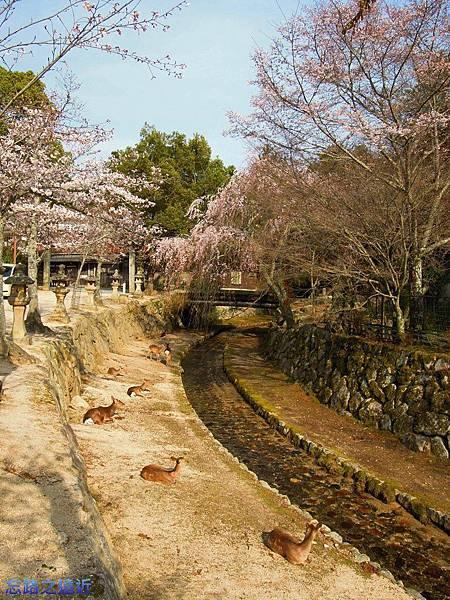18嚴島神社疏水道-2.jpg