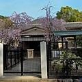 23嚴島神社社務所.jpg
