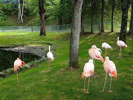 1旭山動物園-紅鶴.jpg