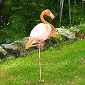 2旭山動物園-紅鶴.jpg