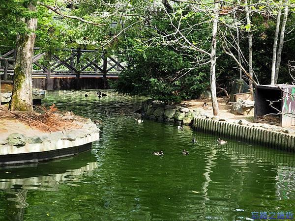 3旭山動物園-鳥類之村.jpg