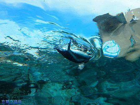 6旭山動物園-企鵝.jpg