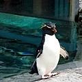 13旭山動物園-企鵝.jpg