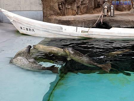 40旭山動物園-海豹.jpg