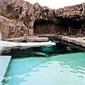 42旭山動物園-海豹.jpg