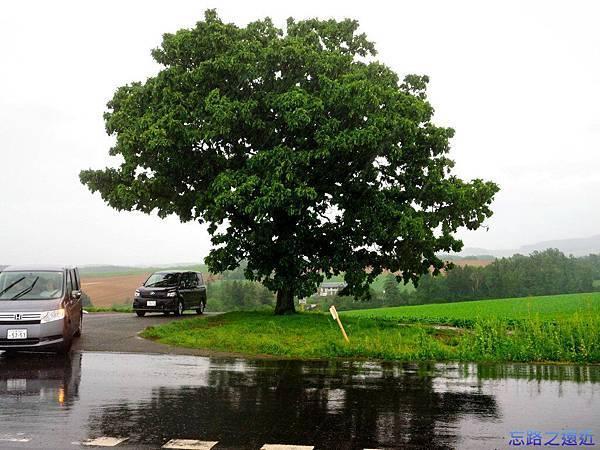 1seven-star tree.jpg