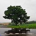 2seven-star tree.jpg