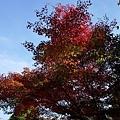 16苔寺楓紅-1.jpg