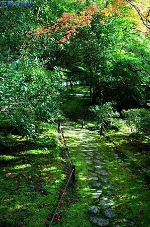 21苔寺小徑-1.jpg