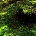 21苔寺苔上楓紅-2.jpg