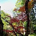 32苔寺楓紅-4.jpg