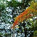 33苔寺楓紅-5.jpg