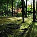 40苔寺黃金湖畔樹影.jpg