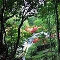 47苔寺向上關望休憩所.jpg