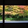 51苔寺休憩所外望.jpg