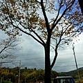 10天橋立酒廠望外-3.jpg