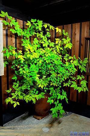 5「蔵」門前植物