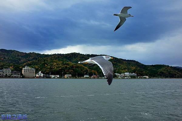 19天橋立海鷗-1.jpg