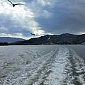 21天橋立海鷗-3.jpg