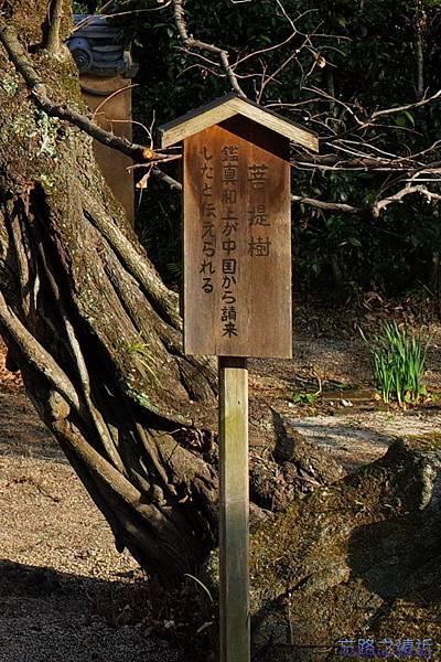 20戒壇院菩提樹說明牌.jpg
