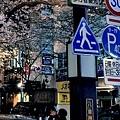 7櫻花通夜櫻拍照者.jpg