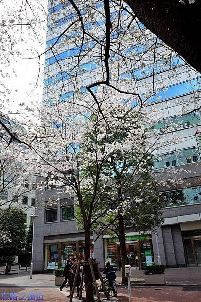 16櫻花通大樓與櫻花-2.jpg