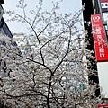 17櫻花通大樓與櫻花-3.jpg