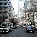 21櫻花通高島屋端望東京站端.jpg