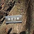 19新宿御苑櫻花-4.jpg