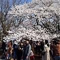 21新宿御苑拍櫻花者-2.jpg