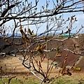 34大室山火山口-3.jpg