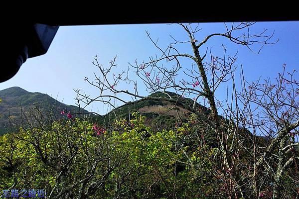 26河津石田屋離屋櫻外緣望外庭園-1.jpg
