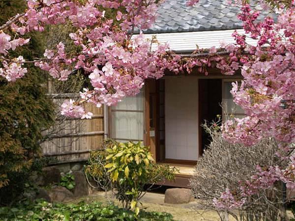 石田屋櫻庭院櫻花