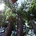 41日枝神社子宝之杉-3.jpg