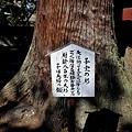42日枝神社子宝之杉說明牌.jpg