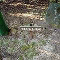 71枇杷登山道-女坡指示.jpg