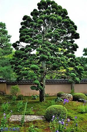16天得院桔梗庭園-2.jpg