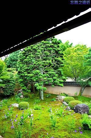 17天得院桔梗庭園-3.jpg