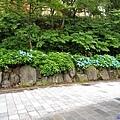 5定山溪溫泉入口紫陽花-1.jpg