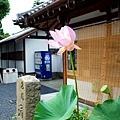 4東福寺通天橋拜觀受付處蓮花.jpg