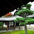 7東福寺通天橋拜入口接書院處.jpg