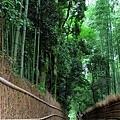 24野宮神社竹林小徑.jpg
