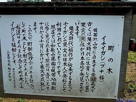 48本宮町木一位樫說明牌.jpg