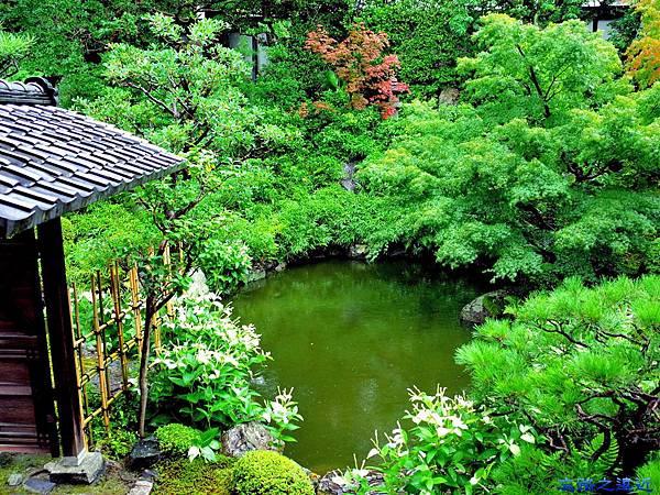 7兩足院庭園半夏生-1.jpg