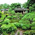 8兩足院庭園半夏生-2.jpg