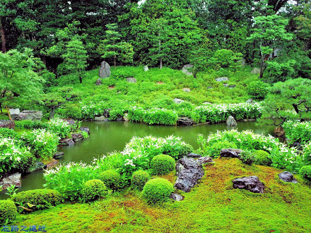 10兩足院庭園半夏生-3.jpg