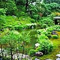 11兩足院庭園半夏生-4.jpg