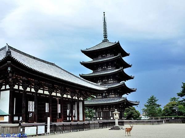 4興福寺東金堂與五重塔.jpg