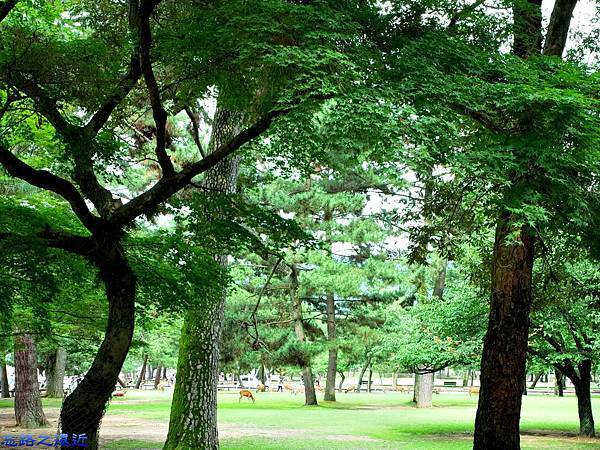 2興福寺旁公園鹿群.jpg